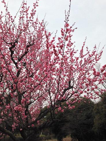 大仙公園 春1