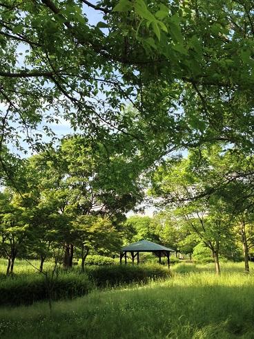 大仙公園 新緑の季節から~