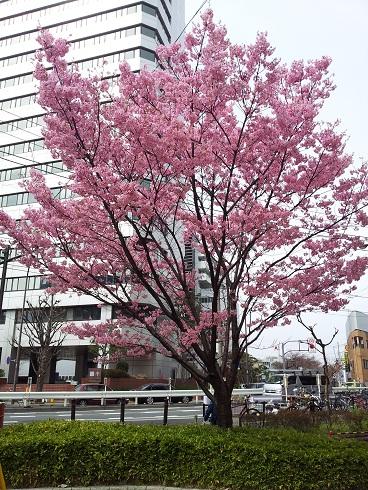 桜が咲いていた!?